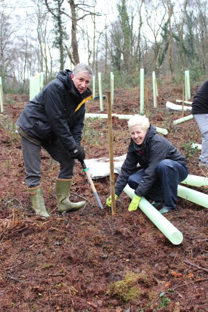 Planting trees in the Government accredited Woodland Carbon scheme