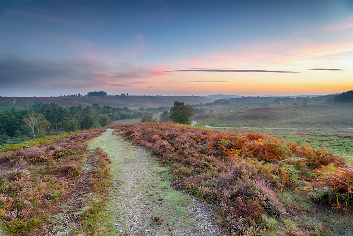 Sunrise over Rockford Common in the New Forest National Park in Hampshire